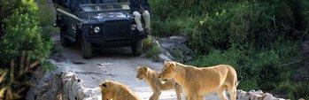 African Highlights Safari
