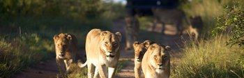 Affordable Kruger 4-Day Private Safari (Timbavati)