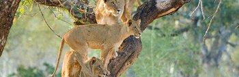 Kruger and Mozambique Combination Safari