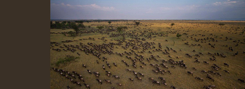 Specialists in Luxury and Adventure Safaris to Africa