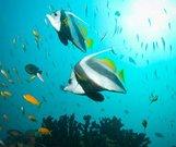 巴扎鲁托群岛