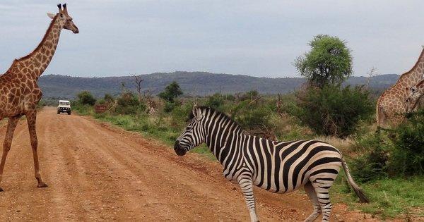 South Africa Safari | Safari365