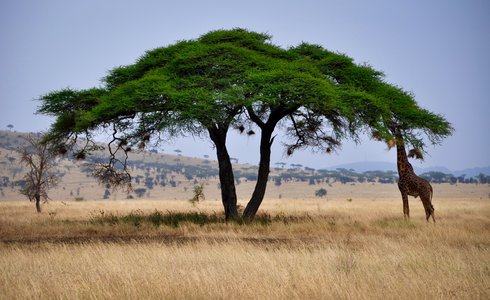 The Best of Southern and East Africa Tour | Safari365