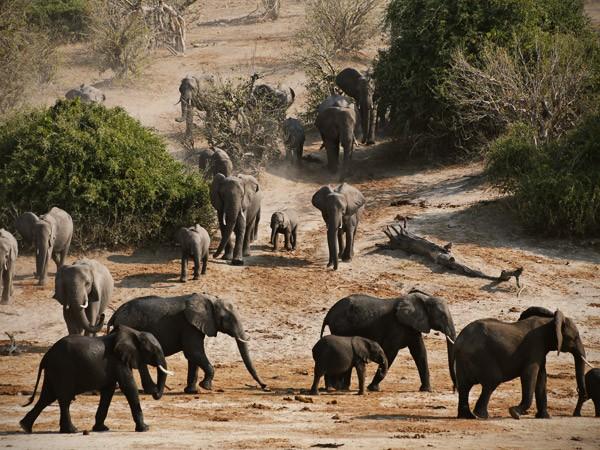 Chobe National Park Conservation