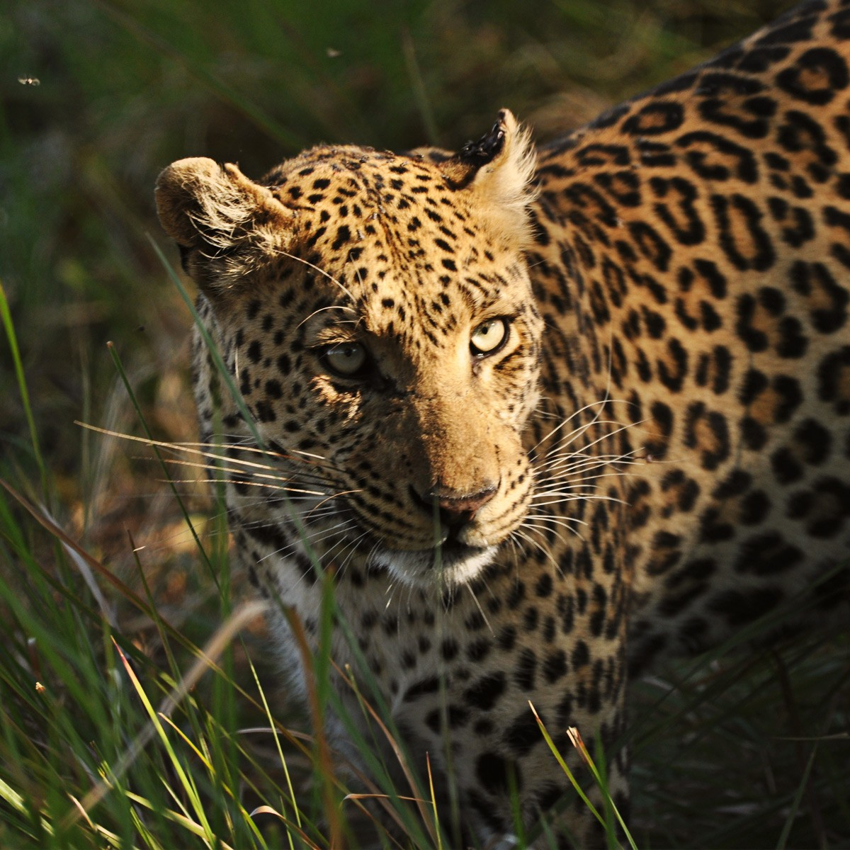 Botswana Safari Highlights