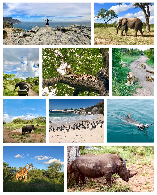 South African Safari Review
