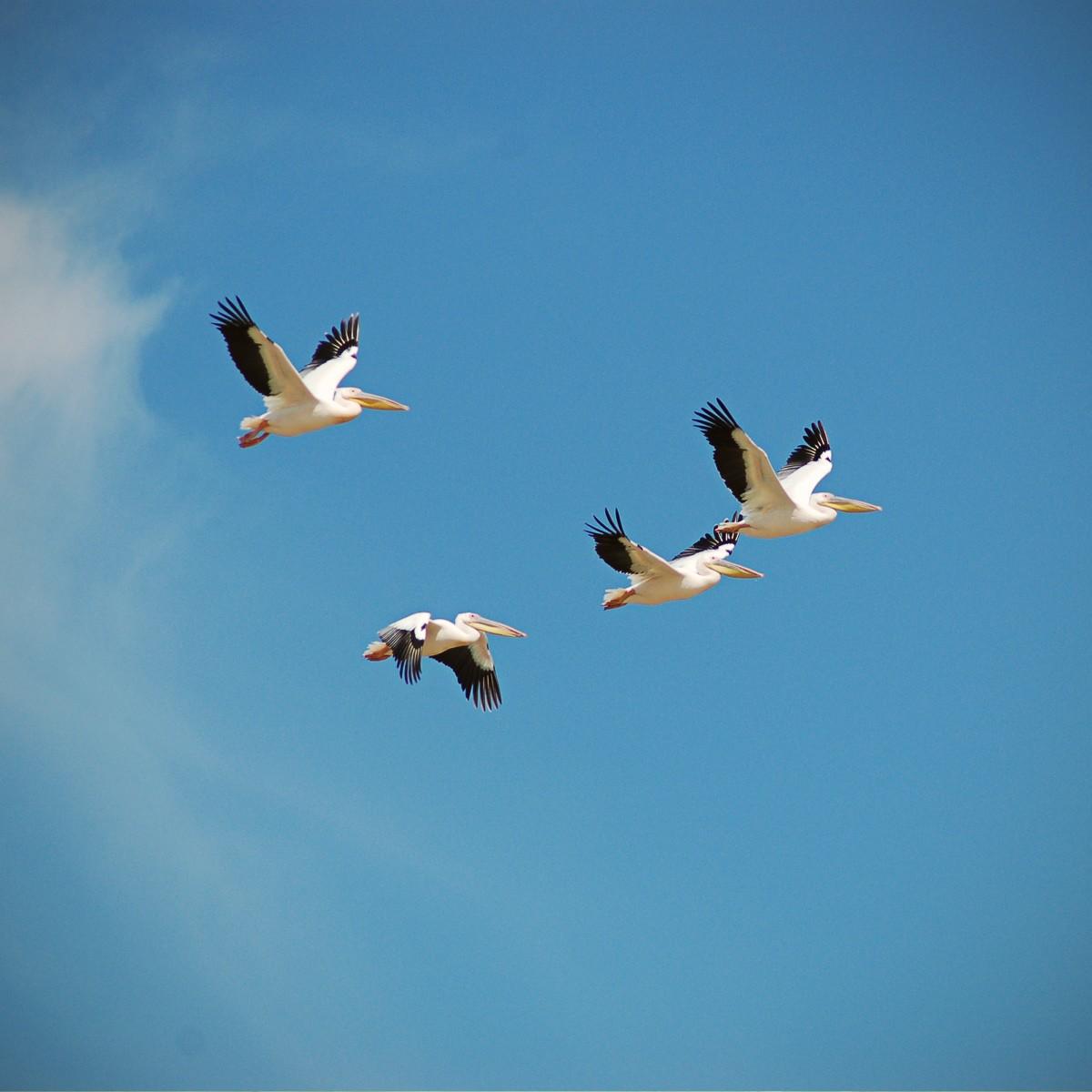 Chobe River Birding Season