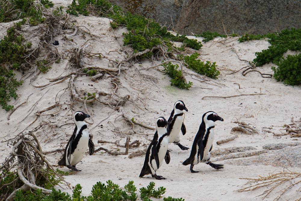 Cape Peninsula Review