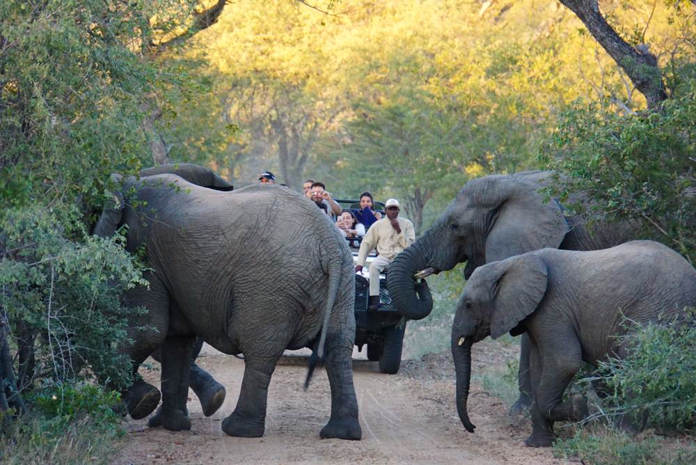 Kapama Private Game Reserve Review