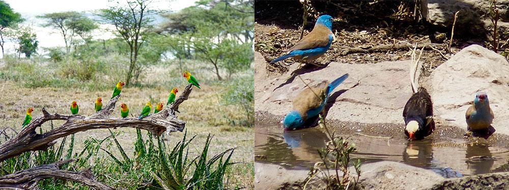 Birding Tanzania Safari