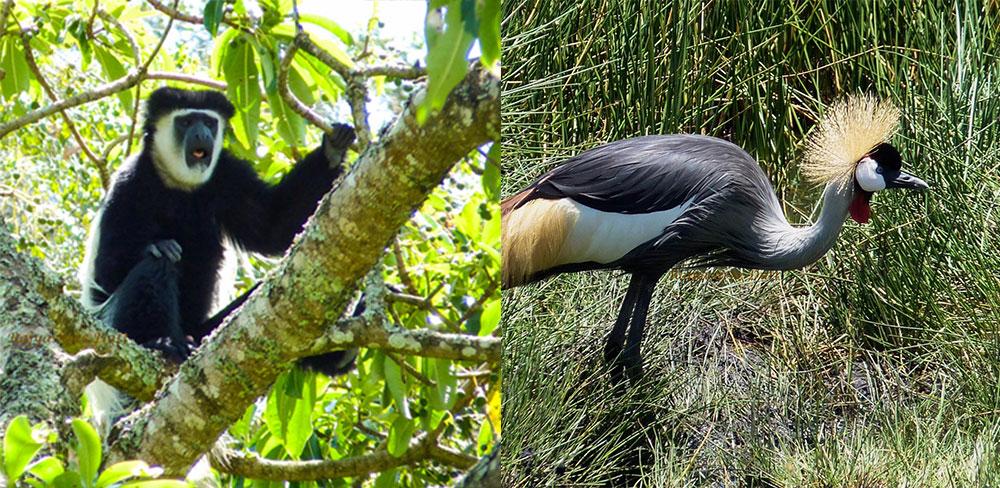 Birding Tanzania