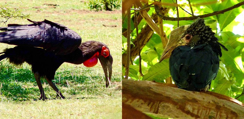 Birding Safari Tanzania