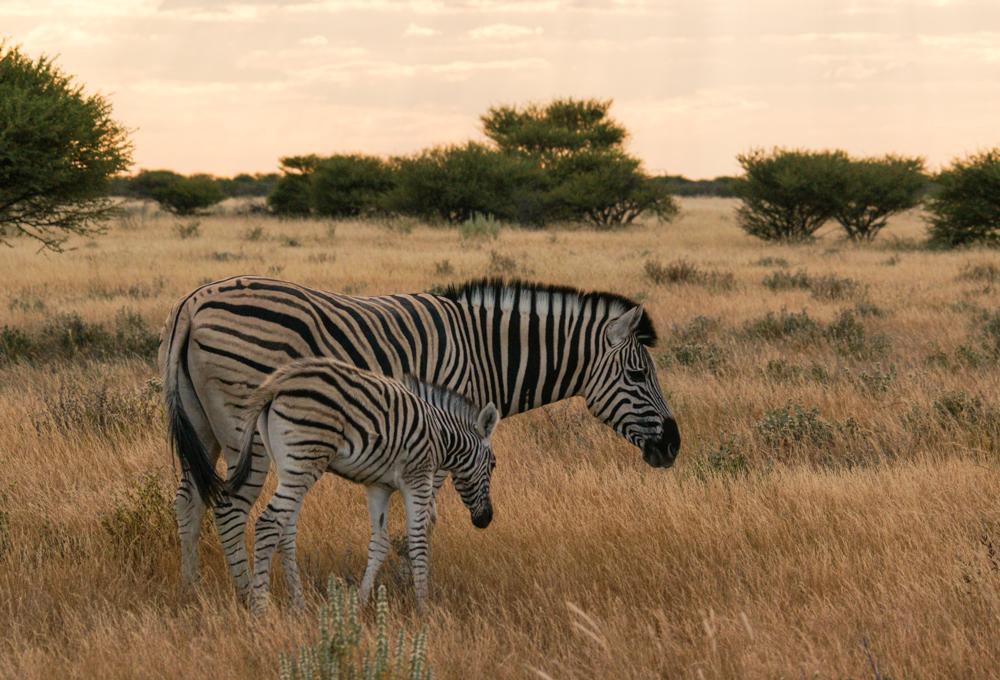 Etosha Wildlife Gallery