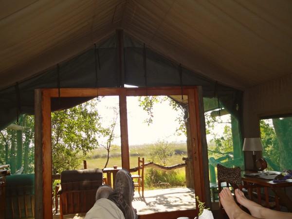 comfort safari