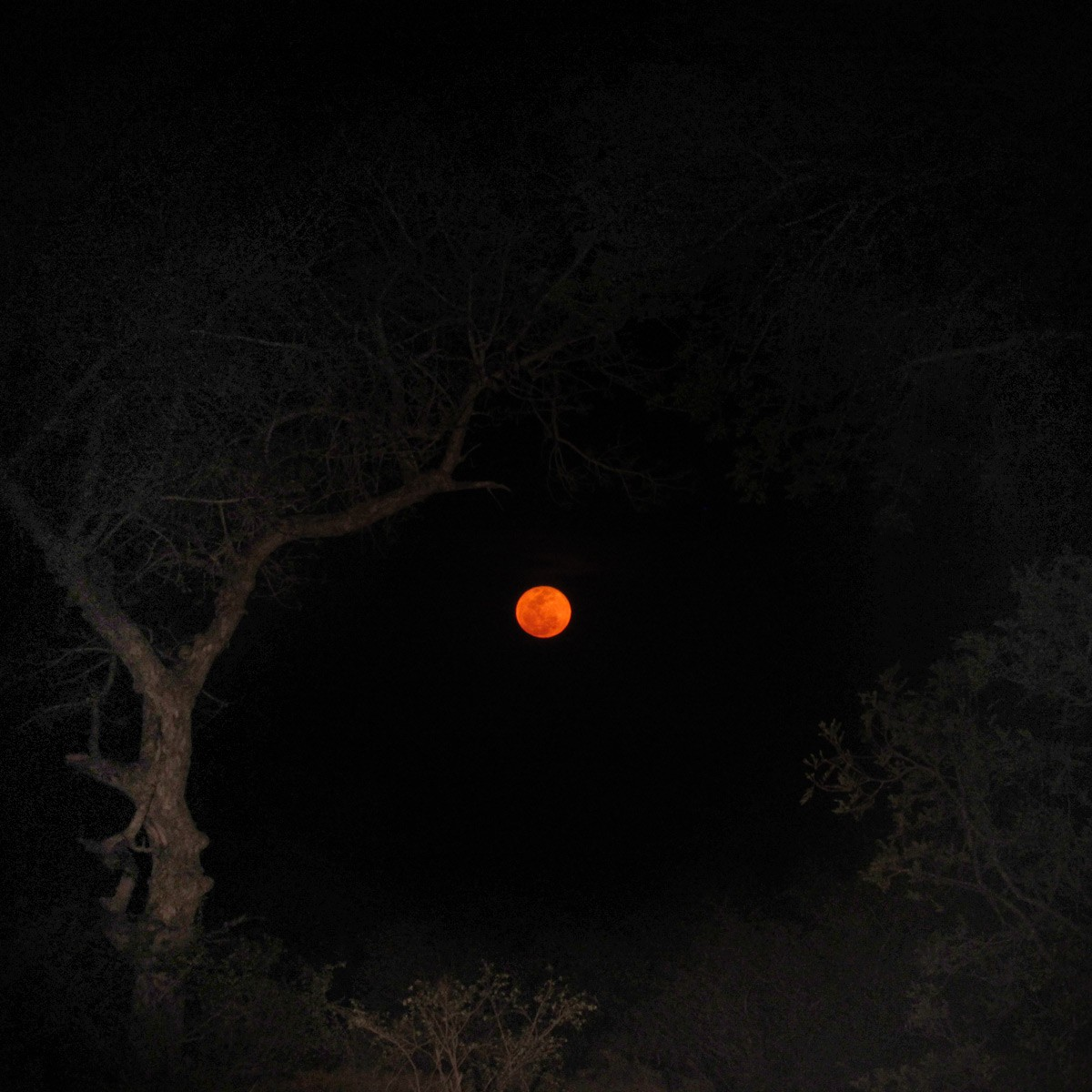 Blood Moon Kruger National Park