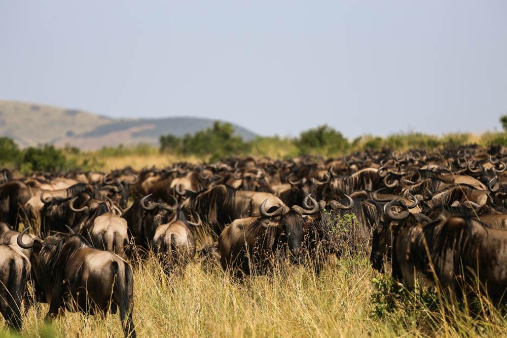 Great Migration Mating Season
