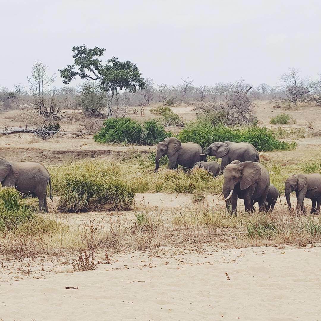 Simbavati Kruger National Park