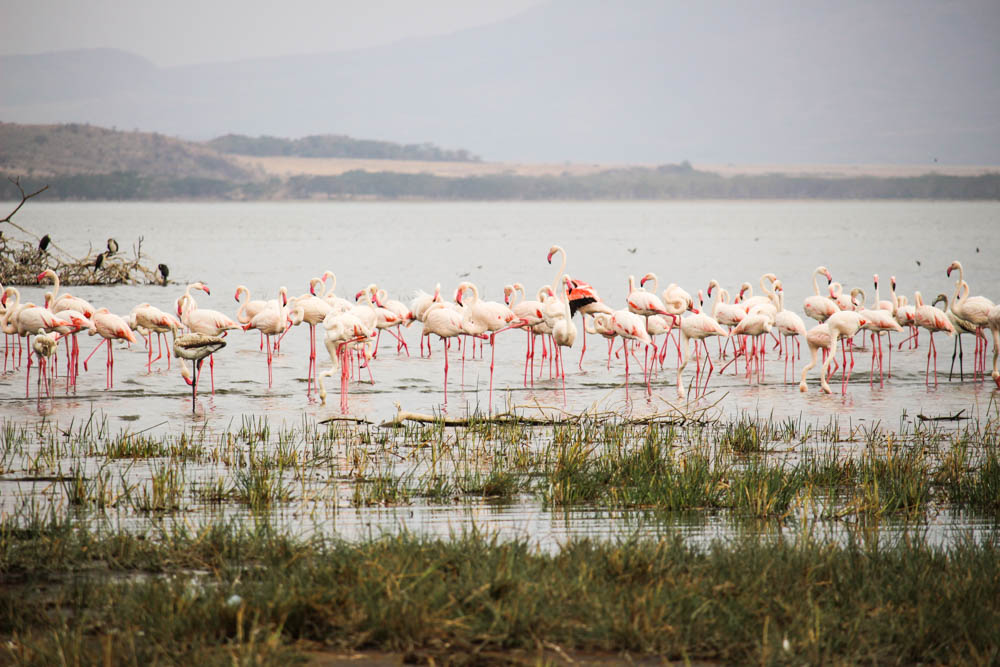 Kenya Lake Systems World Heritage Site