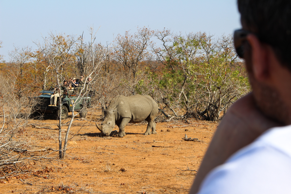 Why Choose a Kruger Private Game Reserve