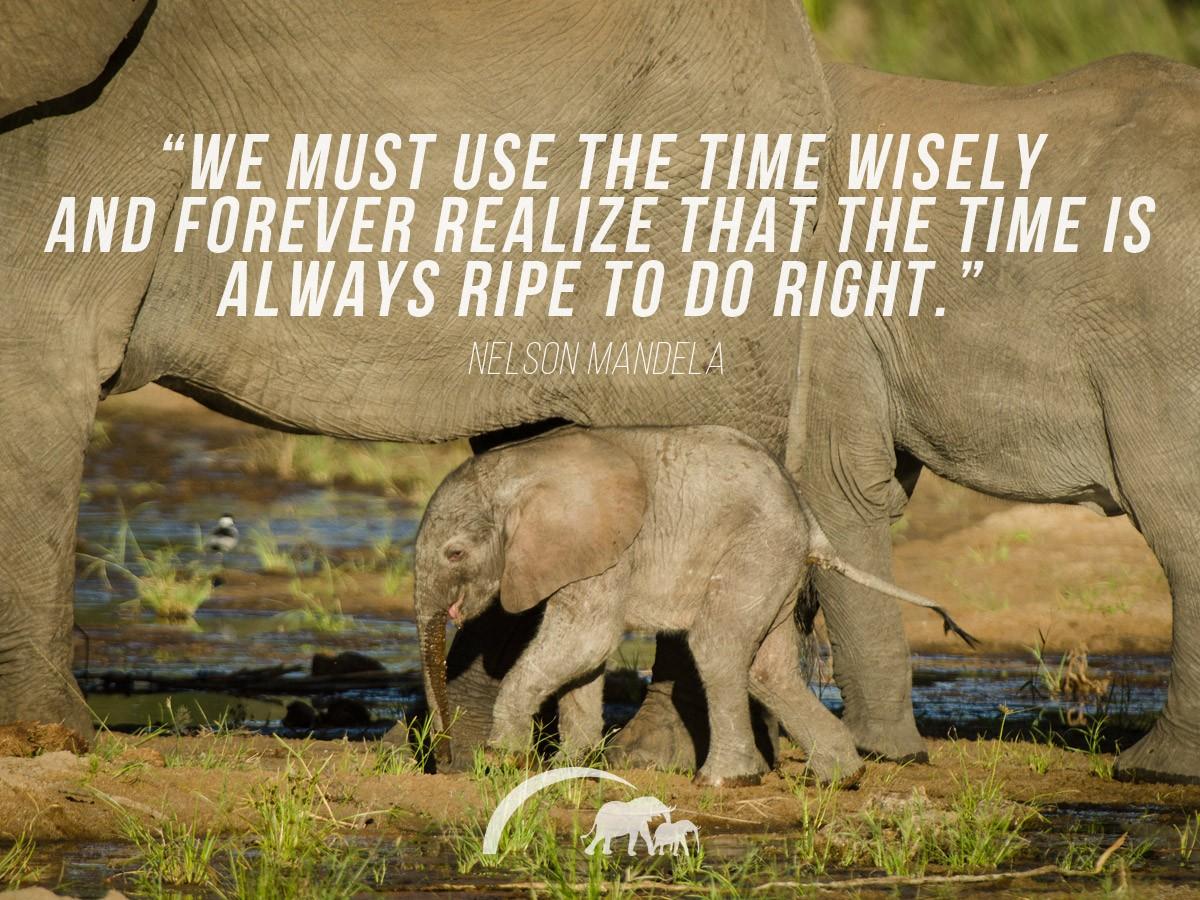 Nelson Mandela quotes 9