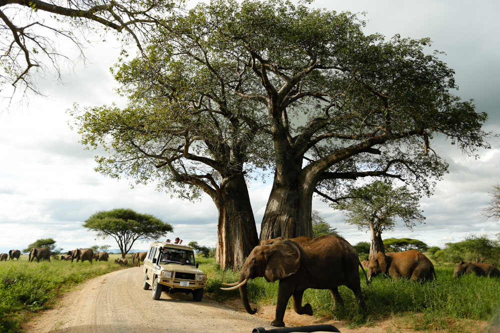 Serengeti Safari Game Drive