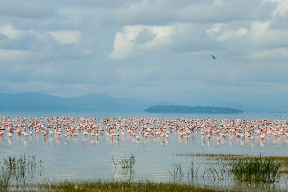 Flamingo Lake Manyara
