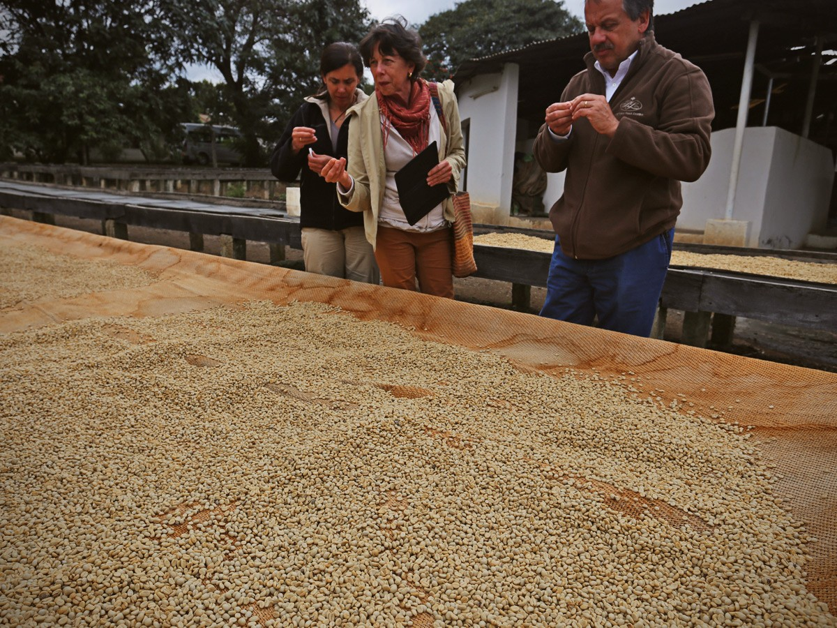 Kimemo Coffee Tours