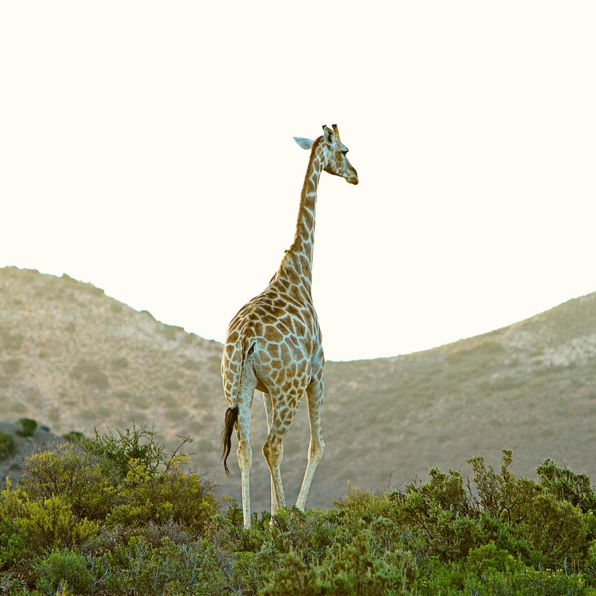 Little Karoo Touwsberg