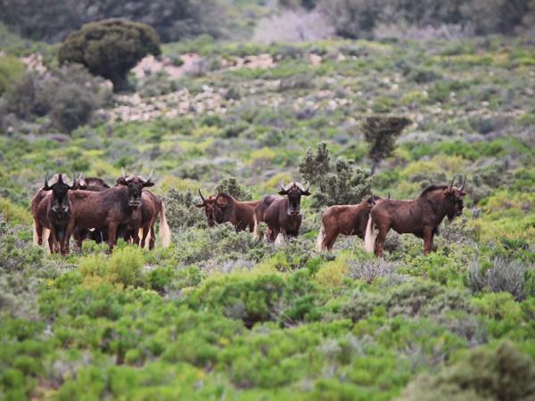 Touwsberg safari