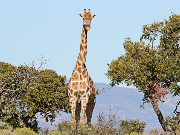 Touwsberg wildlife
