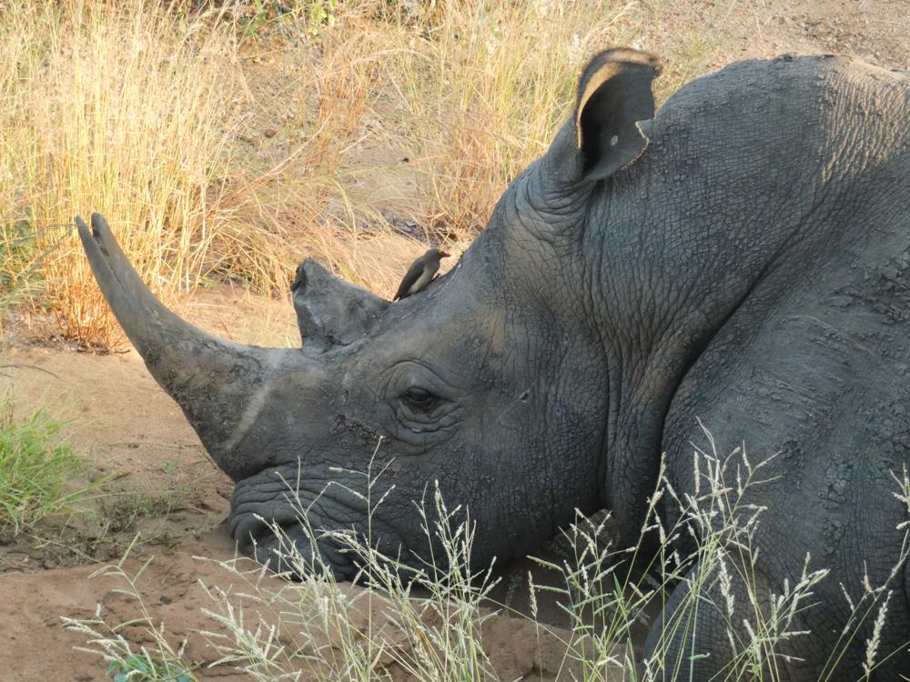 Kruger Wildlife Gallery