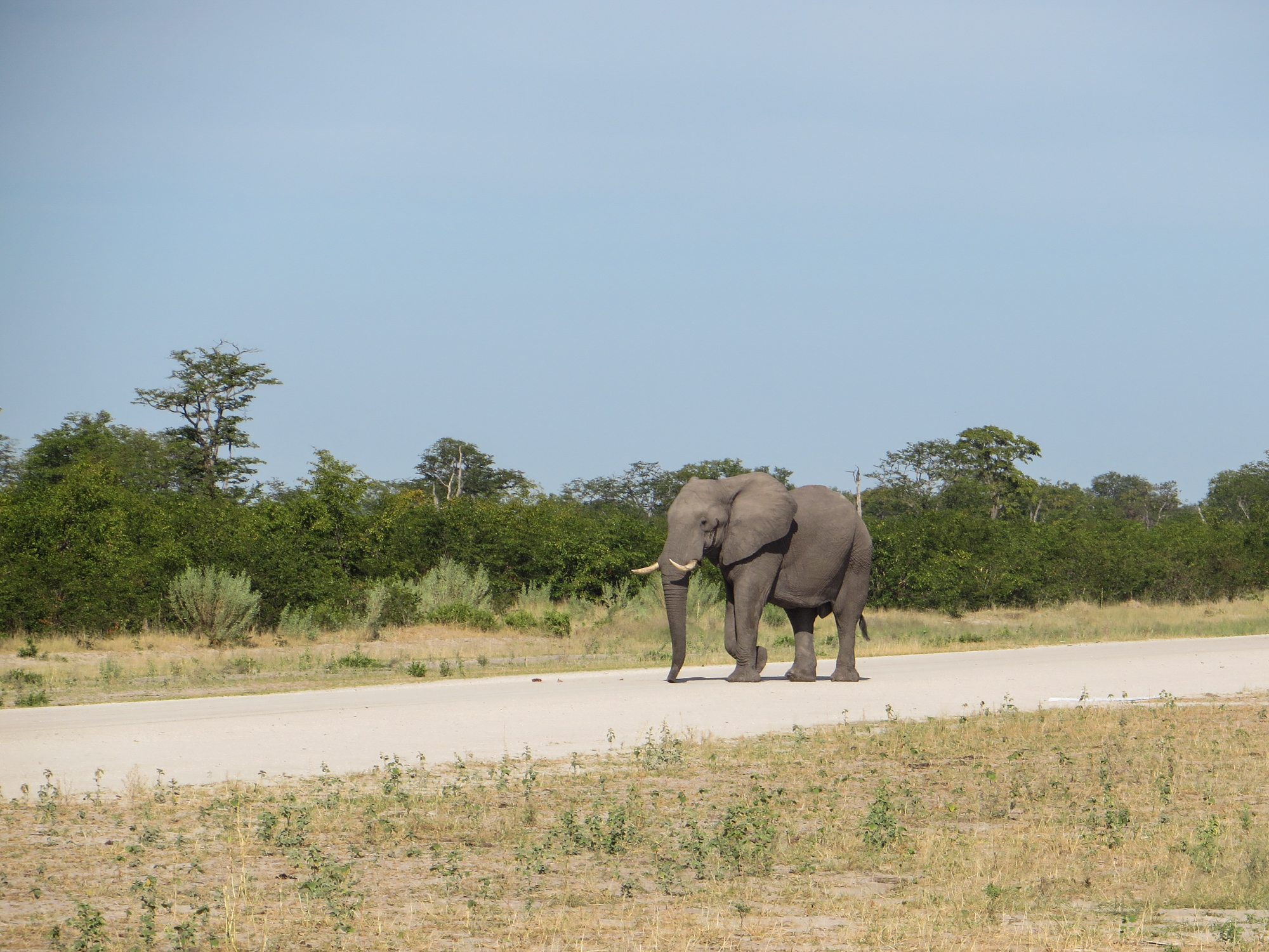 Botswana Staff Educational Trip