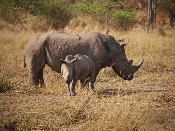 Botswana's wildlife now reserves rhino