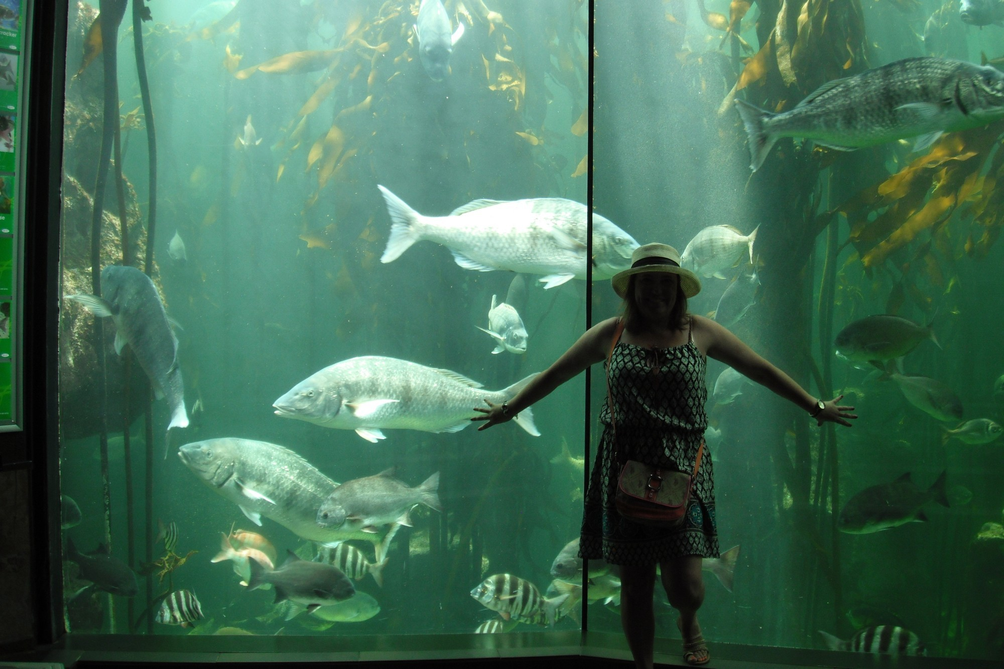 Freshwater aquarium fish cape town - Photo By Safari365 S Client Envada M From Brazil The Aquarium Is Superb To Visit Especially With Children