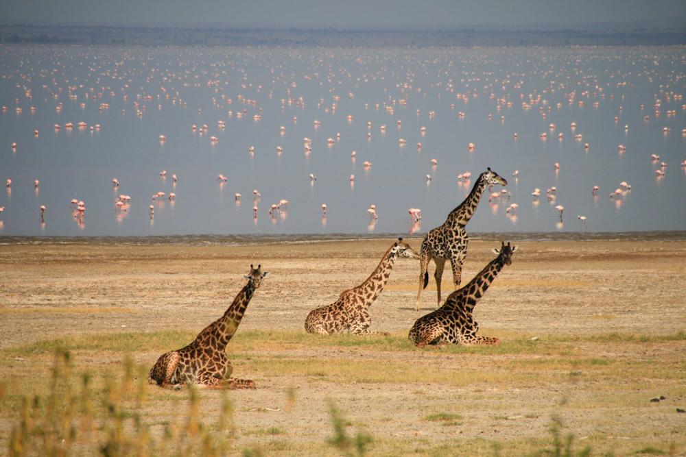 Wildlife at Lake Manyara