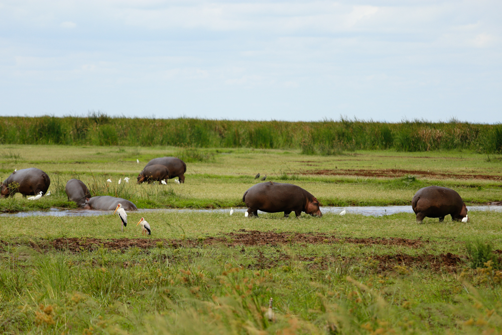 Lake Manyara Hippo Pool
