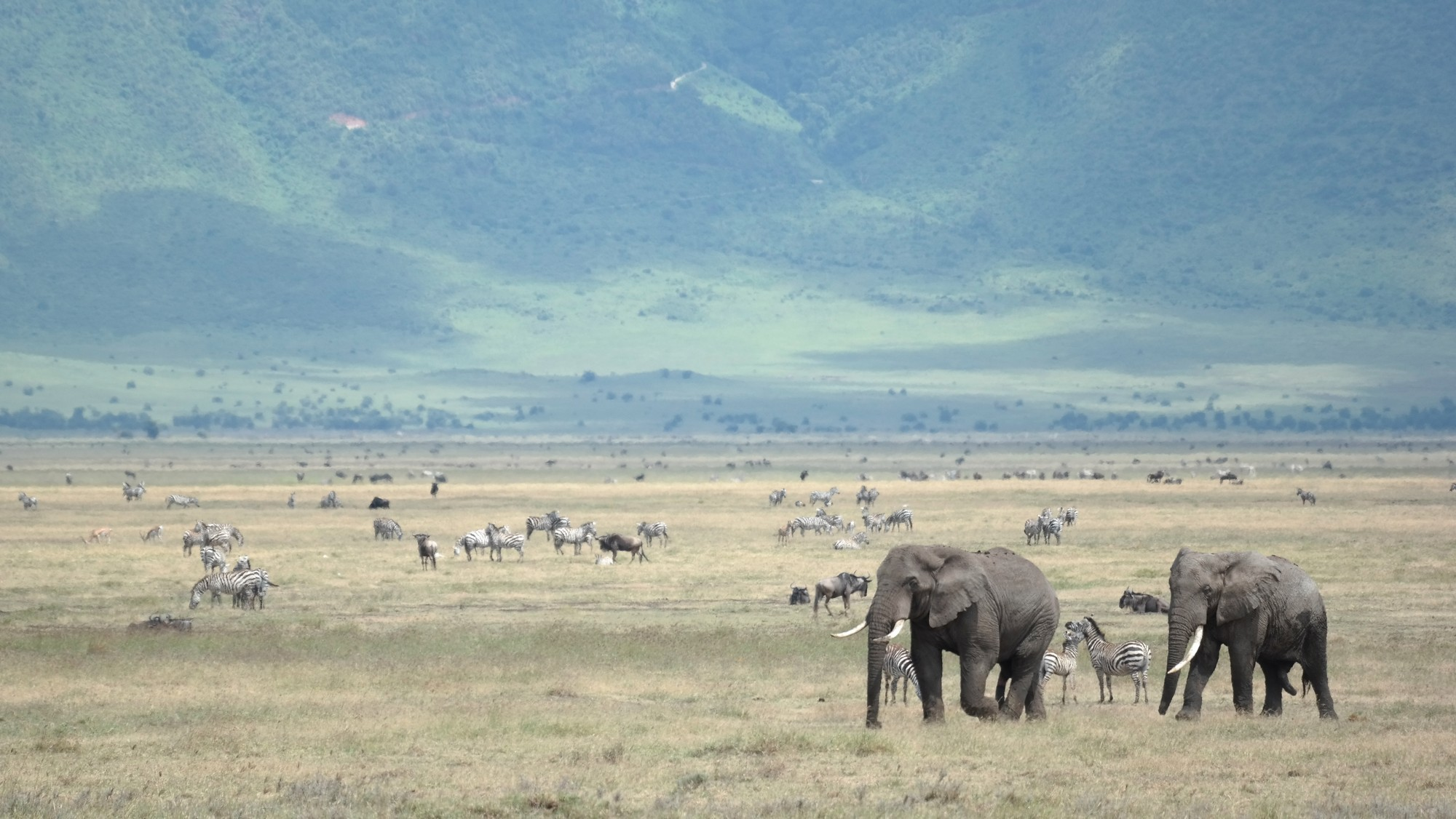 6 Days Ngorongoro Crater Safari