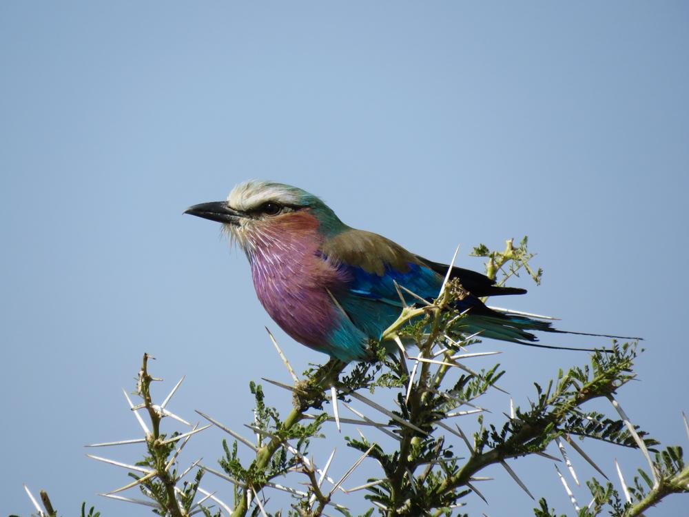 Serengeti Birding Safari