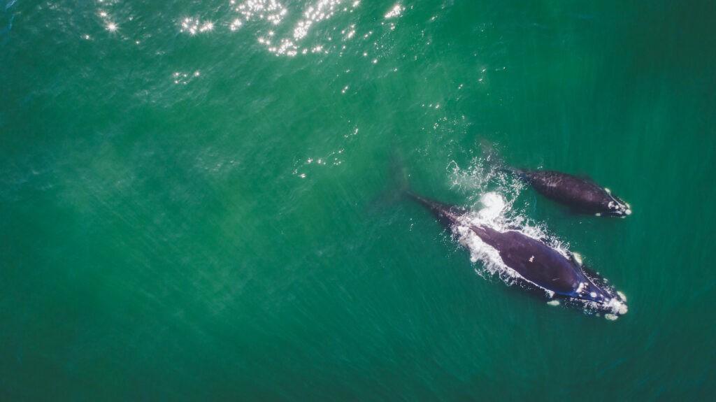 Whale Coast & the Overberg