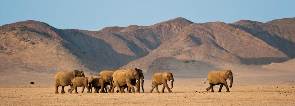 Namib Desert and Sossusvlei